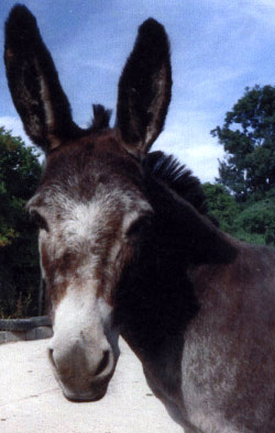 Dorothy, a donkey, who benefited from Camrosa for growths